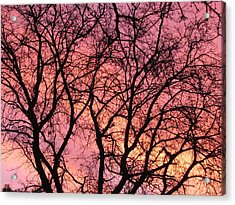 Sunset Behind The Trees Acrylic Print by Debra Madonna