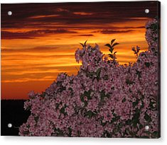 Sunset Blooms Acrylic Print