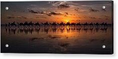 Sunset Camel Safari Acrylic Print