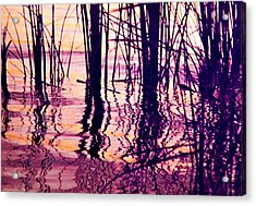 Sunset Cattails Acrylic Print