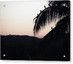 Acrylic Print featuring the photograph Sunset Chorus by Brian Boyle