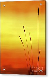 Sunset Acrylic Print by Christopher Mace