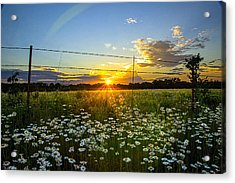 Sunset Daisies Acrylic Print by Jean Hutchison