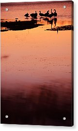 Sunset Discourse- Gorton Pond Warwick Rhode Island Acrylic Print by Lourry Legarde