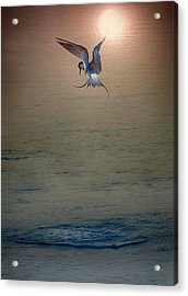 Sunset Dive Acrylic Print