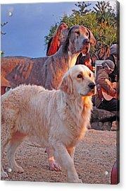 Sunset Dog Dreaming Acrylic Print by Ankya Klay