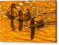 Sunset Ducks Acrylic Print by Brian Stevens