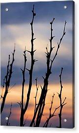 Sunset Acrylic Print by Elizabeth Budd
