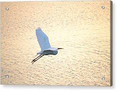 Acrylic Print featuring the photograph Sunset Flight by Carol  Bradley