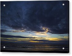 Sunset Flight Acrylic Print by Mitch Boyce