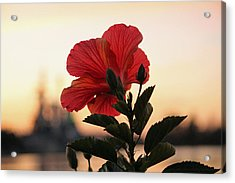 Acrylic Print featuring the photograph Sunset Flower by Cynthia Guinn