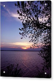 Sunset From The Trees Acrylic Print by Virginia Forbes