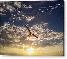 Sunset Gull Acrylic Print