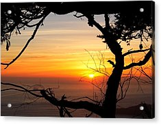 Sunset In A Tree Frame Acrylic Print