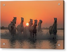 Sunset In Camargue Acrylic Print