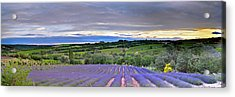 Sunset In Provence Acrylic Print