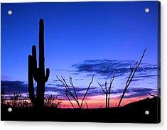 Sunset In Saguaro National Park Acrylic Print by Elizabeth Budd