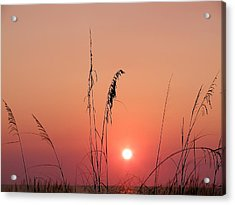 Sunset In Tall Grass Acrylic Print by Bill Cannon