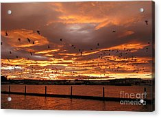 Sunset In Tauranga New Zealand Acrylic Print by Jola Martysz