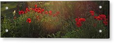 Sunset In The Poppy Garden Acrylic Print by Mary Wolf