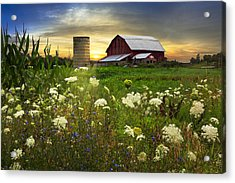 Sunset Lace Pastures Acrylic Print