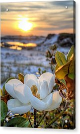 Sunset Magnolia Acrylic Print by JC Findley