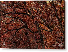 Sunset Oaks 2 Acrylic Print