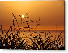 Sunset On Leaves  Acrylic Print by Carlos Caetano