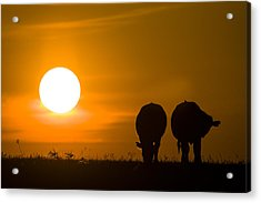 Acrylic Print featuring the photograph Sunset On The Flint Hills by Scott Bean