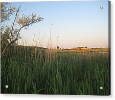 Sunset Over The Marshlands Acrylic Print
