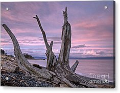 Acrylic Print featuring the photograph Sunset Over The Salish Sea by Inge Riis McDonald