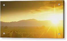 Sunset Over Vineyard, Napa Valley Acrylic Print by Panoramic Images