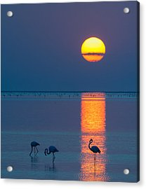 Sunset Over Walvis Bay - Flamingo Silhouette Photograph Acrylic Print