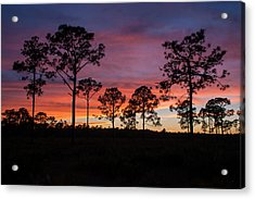Acrylic Print featuring the photograph Sunset Pines by Paul Rebmann