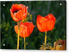 Acrylic Print featuring the photograph Sunset Poppies by Debbie Oppermann