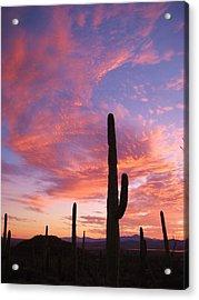 Sunset Saguaro Acrylic Print