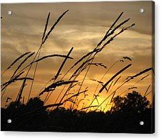 Sunset Sentinels Acrylic Print
