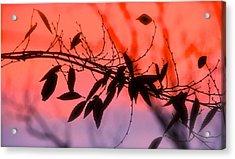 Sunset Serenade Acrylic Print