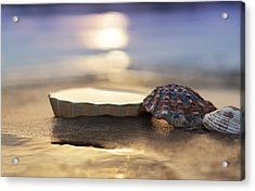 Sunset Shells Acrylic Print by Laura Fasulo