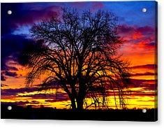 Sunset Silhouette Acrylic Print by Greg Norrell