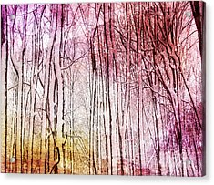 Sunset Snow Twigs Acrylic Print