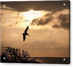 Sunset Soaring Acrylic Print