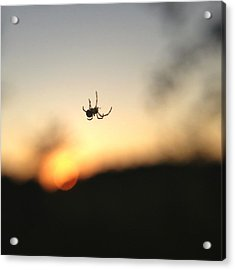 Acrylic Print featuring the photograph Sunset Spidey by Nikki McInnes
