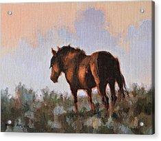 Sunset Stallion Acrylic Print by Karen McLain