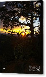 Sunset Through Branch Acrylic Print