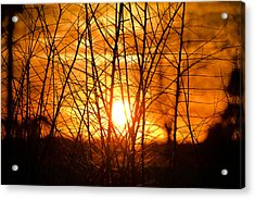 Sunset Through The Brush Acrylic Print