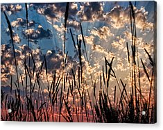 Acrylic Print featuring the photograph Sunset Through The Grasses by Don Schwartz