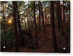 Acrylic Print featuring the photograph Sunset Through The Hemlocks by Haren Images- Kriss Haren