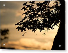 Acrylic Print featuring the photograph Sunset Through The Trees by John Hoey