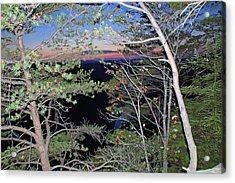 Sunset Thru The Pines Acrylic Print by Aimee L Maher Photography and Art Visit ALMGallerydotcom